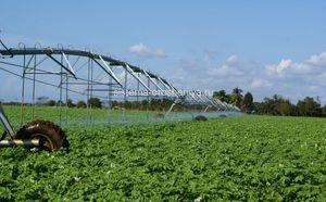 Стратегии планирования режима орошения картофеля