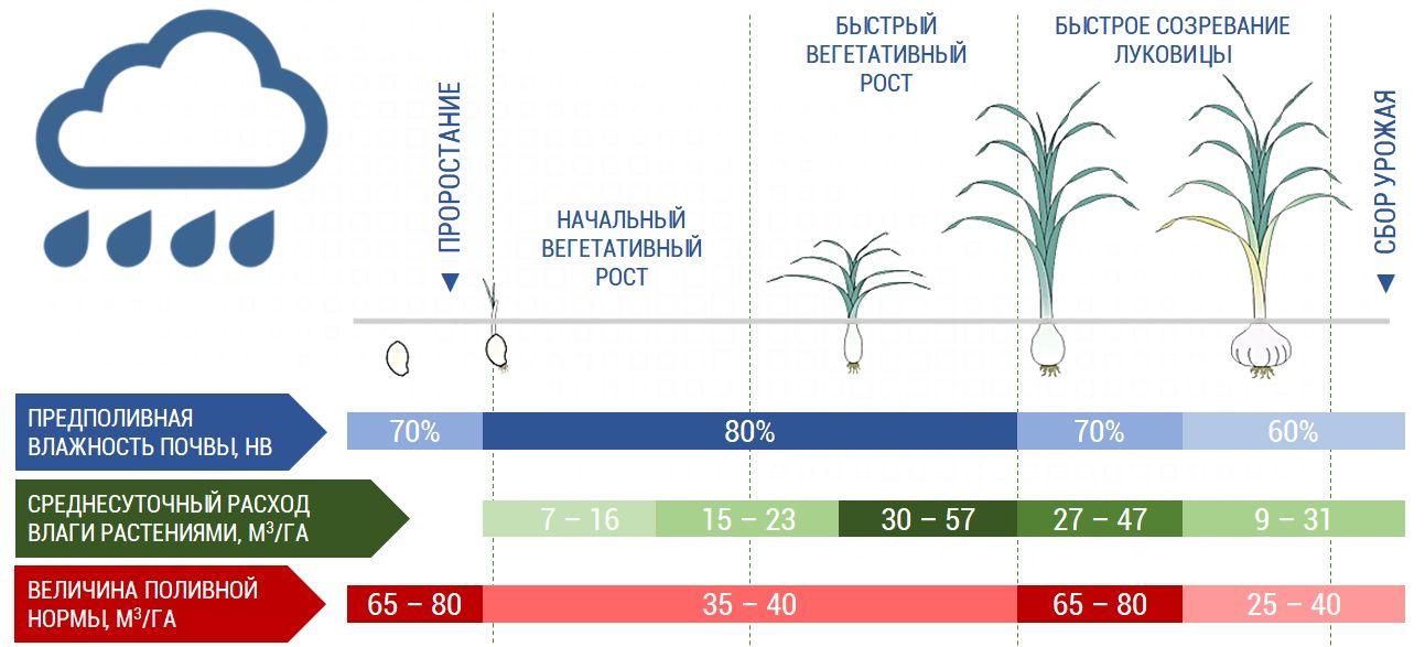 Зависимость потребности во влаге от периода роста