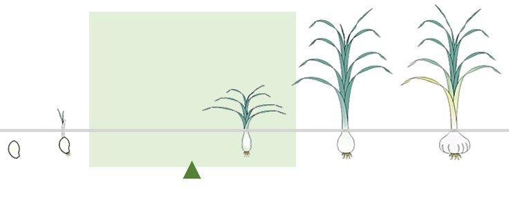 Период эффективного использования удобрений