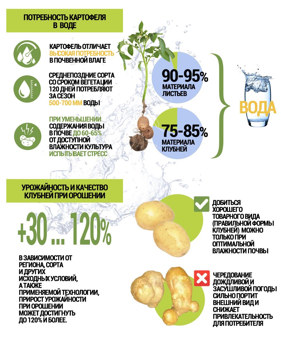 Потребность картофеля в воде. Урожайность и качество клубней при орошении